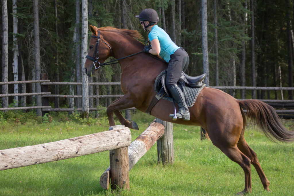 equine_jumping